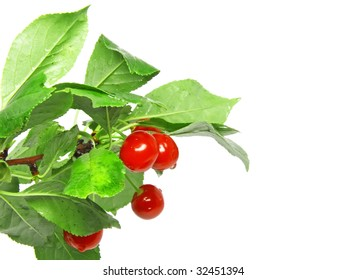 Red cherry  on branch with foliage . Isolated.