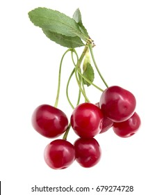 Red cherry on a white background