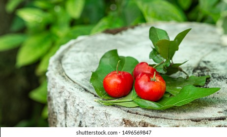 Red cherry Thai or Acerola cherries fruit on the green leaf, high vitamin C and antioxidant fruits. Selective focus.