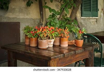 Red chili pepper in a flowerpot on a table