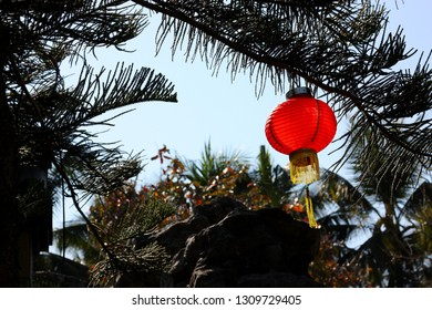 A red chinese lantern on a pine tree in the garden, Thailand.