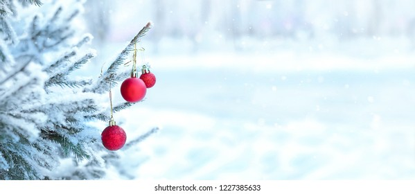 Red christmas ball hanging on pine branches covered with snow. green spruce tree an red ball in snow. Christmas or new year's holidays composition. Long banner, copy space