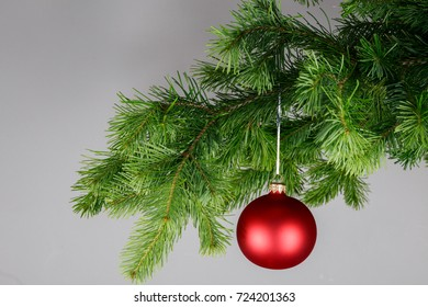 Red Christmas ball on a spruce branch. Gray background.