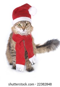 Red Christmas cat in red cap with scarf