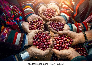 Red coffee beans in farmer hand macro close up view