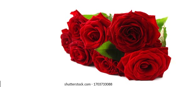 Red color roses beautiful bouquet close up isolated on white background. Holiday greetings concept. Selective soft focus. Shallow depth of field. Text copy space.