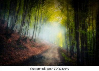 Red and colorful autumn colors in the beech forest in the fog