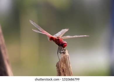 Red colorful hopper - Image