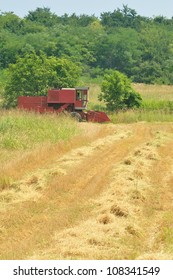 Red combine harvesting in the field of wheat