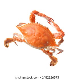 Red crab isolated on white background stock photo