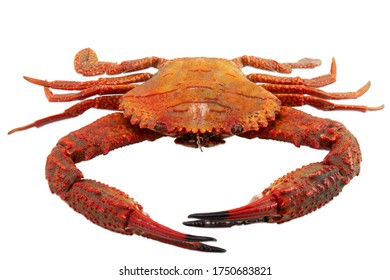 Red crab isolated on white background , Cooked crab