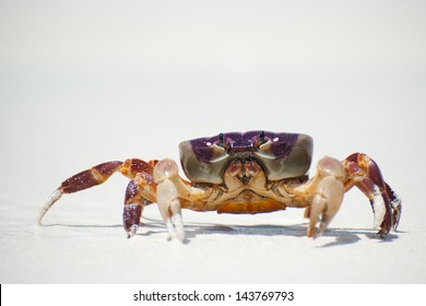 red crab on beach ,Tachai island, Similan island group, Phang nga, Thailand