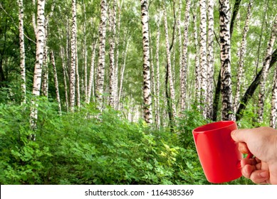 red cup in hand against a birchwood