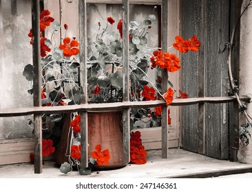 Red curly flowers in copper pot placed behind the rusty lattice on a grungy sill of the stone house. Closed window with lace curtain and wooden shutters. Aged photo.
