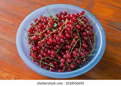 Red currant berries in a blue bowl on a background of painted wood.