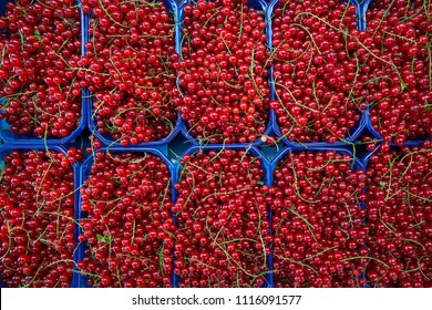 Red currant berries in market boxes pattern background