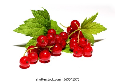 Red currant berry close up isolated on white background.
