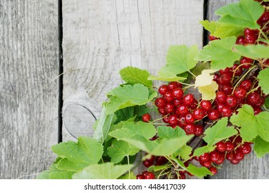Red currant. The branch with leaves on a old table.
