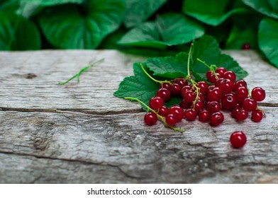 Red currant in a garden on a wooden board