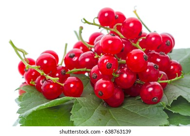 Red currant on a green leaf isolated on the white background