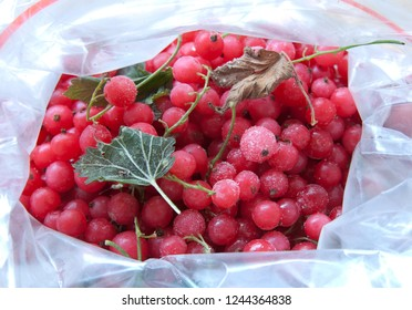 Red currant in a plastic freezer bag