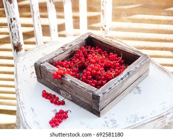red currant in a wooden old box on a white vintage chair, selective focus and toned image