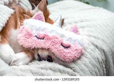 Dog Sleeping Mask Images, Stock Photos & Vectors | Shutterstock