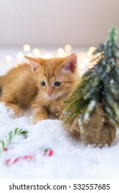 Red cute kitten in the snow near a Christmas tree. Christmas. New Year