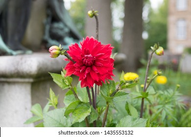 Red dahlia close up. Beautiful colorful lonely flower. Blurry background with a statue. Macro photography. Summertime, Flers, Normandy, France.