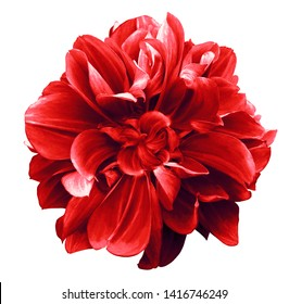 red  dahlia. Flower on the black isolated background with clipping path.  For design.  Closeup.  Nature.