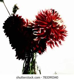 Red Dahlias in a Vase