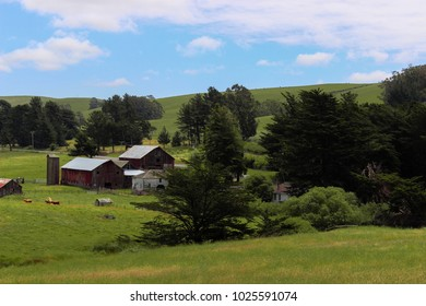 Red dairy barn set in rolling green hills in Califonia.