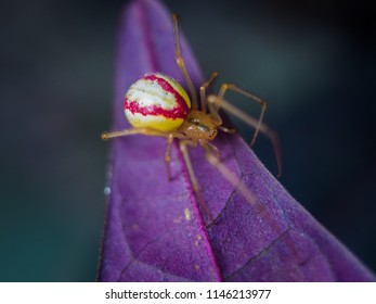 The red danger spider but beautiful.