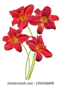 Red daylily bouquet on a white background