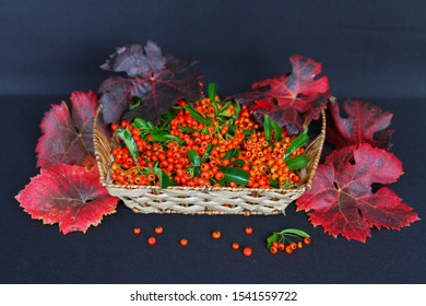 red decorative berries in a basket on a dark background, red beautiful autumn berries in the substrate, red berries of pyracantha, viburnum, mountain ash in a basket on a dark background, bright crims