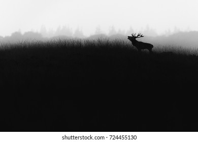 red deer during the rutting season