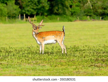 Red deer in the New Forest Hampshire England bright colours illustration like cartoon effect