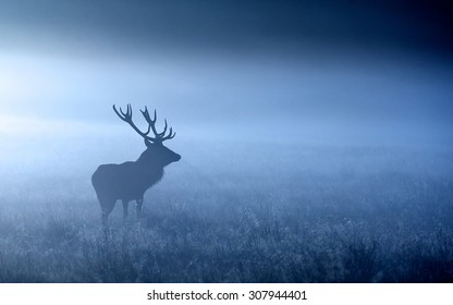 Red deer stag in the blue morning mist