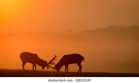Red deer stags silhouette in the early morning mist