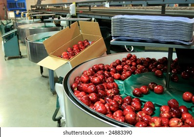 Red Delicious apples in packing tub at fruit warehouse