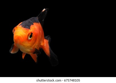 Red devil fish
