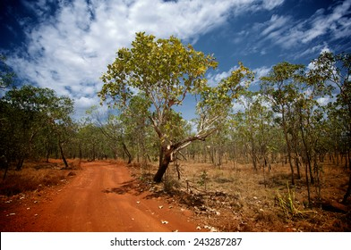 A red dirt road and blue sky make for a typical australian scene in Kakadu National Park, Northern Australia.