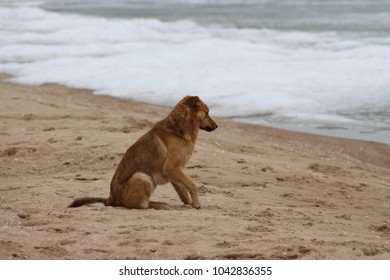 red dog on the beach