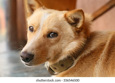 red dog with sad eyes
