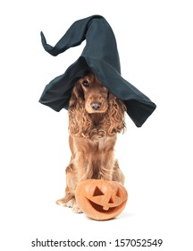 red dog sitting in a witches hat and looks impressive