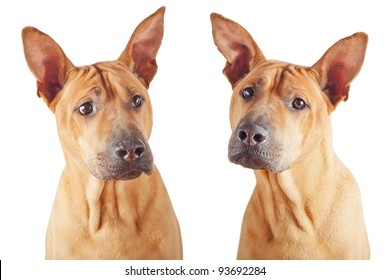 Red dog: two photos isolated over white background.