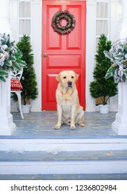 Red door decorated for Christmas with labrador dog near it