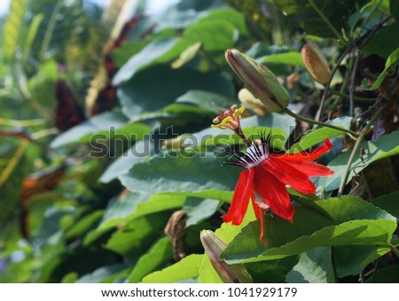 red dragon flowers stock photo edit now 1041929179 shutterstock