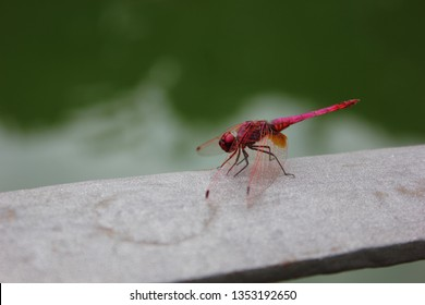 Red dragonfly closeup from the side