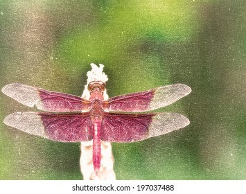 A red dragonfly in rest green background